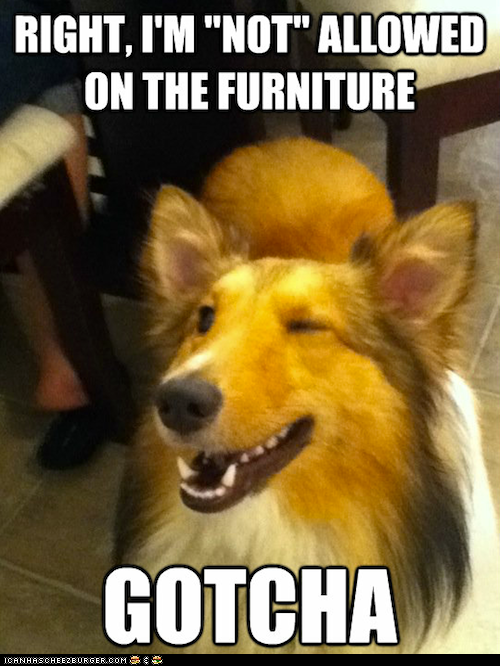 Wink Wink Nudge Nudge Funny Dog Pictures Funny Dogs Funny Animal Pictures