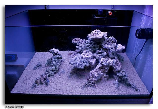 Pin On Fish Tanks Fish