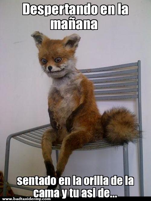 Quedarte Sentado En La Orilla De La Cama Buscar Con Google Imagenes Divertidas Memes De Enfermera Meme Divertido