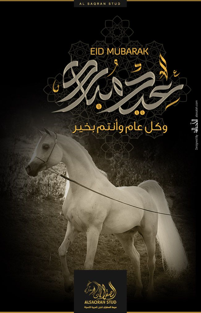 الصقران كل عام وأنتم بخير Arabian Horse Arabians Horses