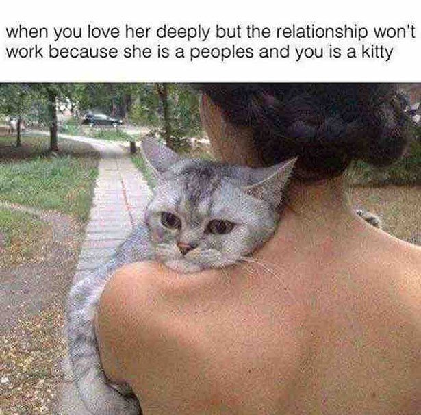When you love her deeply but the relationship won't work (Funny Relationship Pictures) - #cat #in love #kitty #love