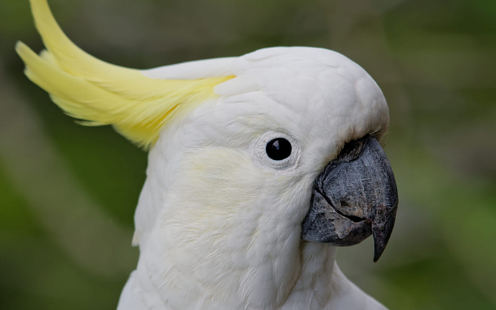 Download Wallpapers White Parrot White Cockatoo White Bird Tropical Birds Parrots Besthqwallpapers Com Parrot Cockatoo Tropical Birds