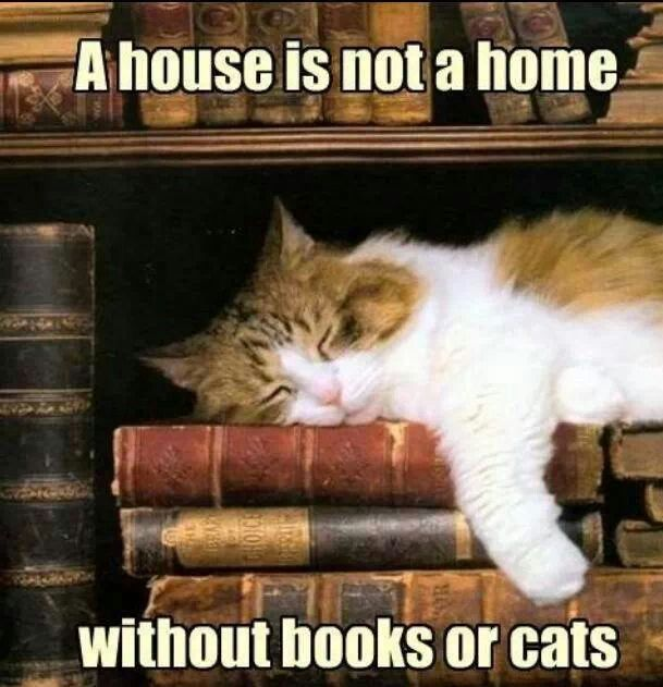 A House Is Not A Home Without Books Or Cats Cat Sleeping Cat