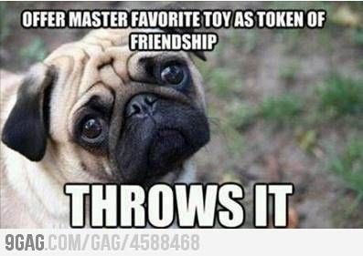Now I feel bad for playing fetch with my dog !