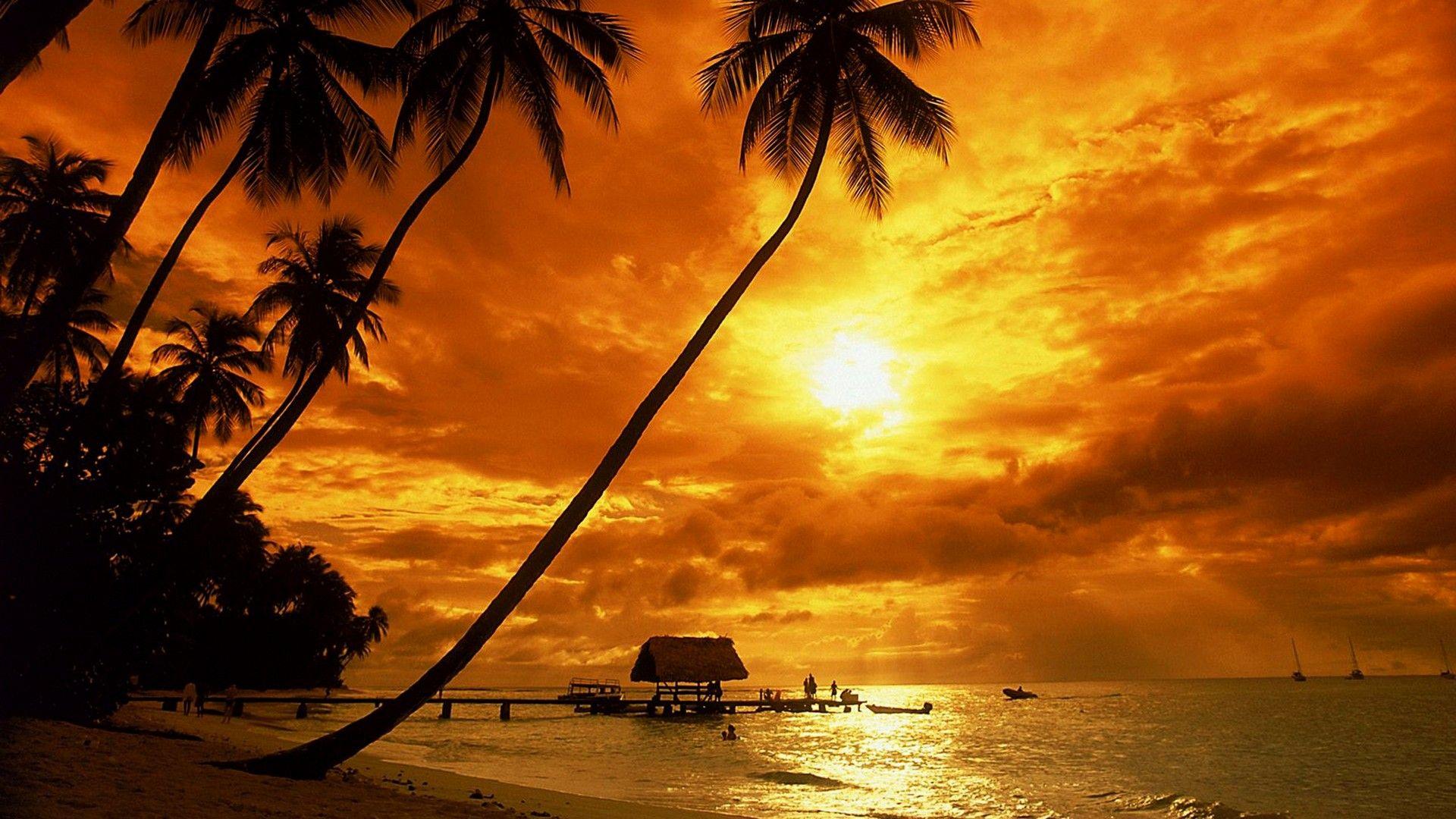 Wallpapers Computer Sunset 2021 Live Wallpaper Hd Sunset Wallpaper Beach Wallpaper Beach Palm Trees