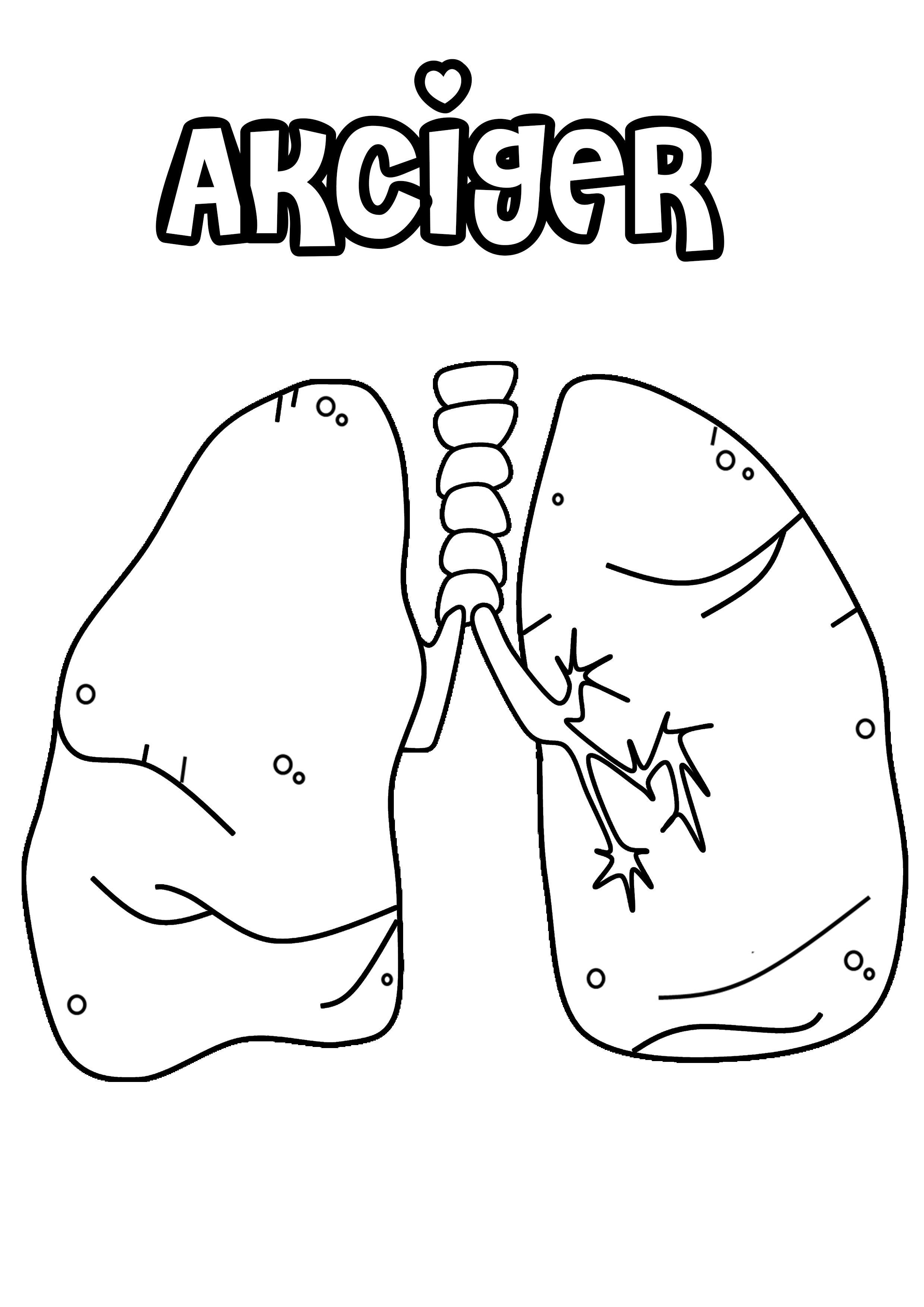 Etkinlikarsivim Tarafindan Organlar Panosundaki Fikir Insan