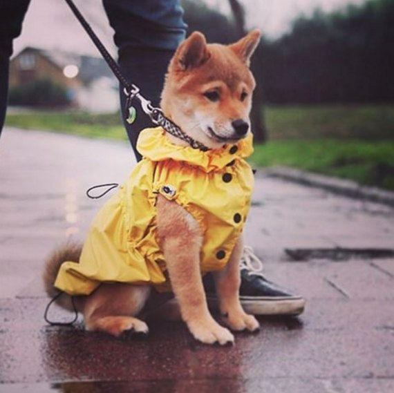 Yellow Dog Raincoat Thin Or Warm Fleece Lining Dog Coat Dog