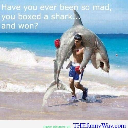 Have you ever been so mad, you boxed a shark... and won? | Funny ...