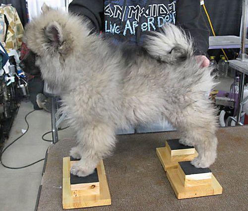 Show Dog Stacking Block Training Tool Dog Show Dog Agility