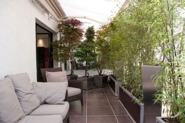 bambuspflanzen b ume k bel balkon sichtschutz m bel balkon balcony terrace und patio. Black Bedroom Furniture Sets. Home Design Ideas