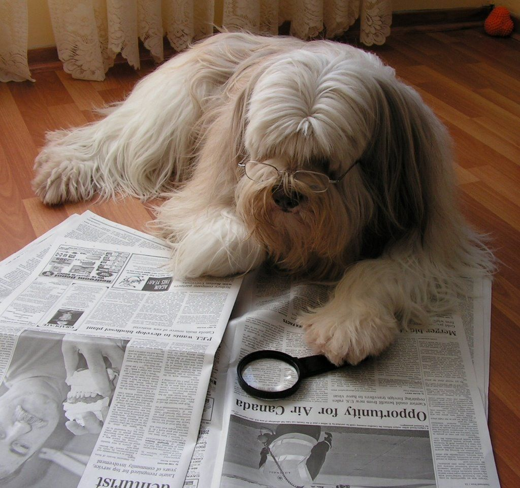 Image result for IMAGE, PHOTO, PICTURE, DOGS READING NEWSPAPER