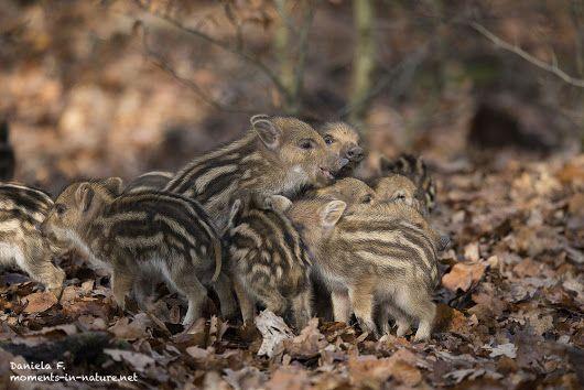 Gruppenkuscheln :-)  #animals #animalphotography #nature #HQSPLandscape #hqsp...