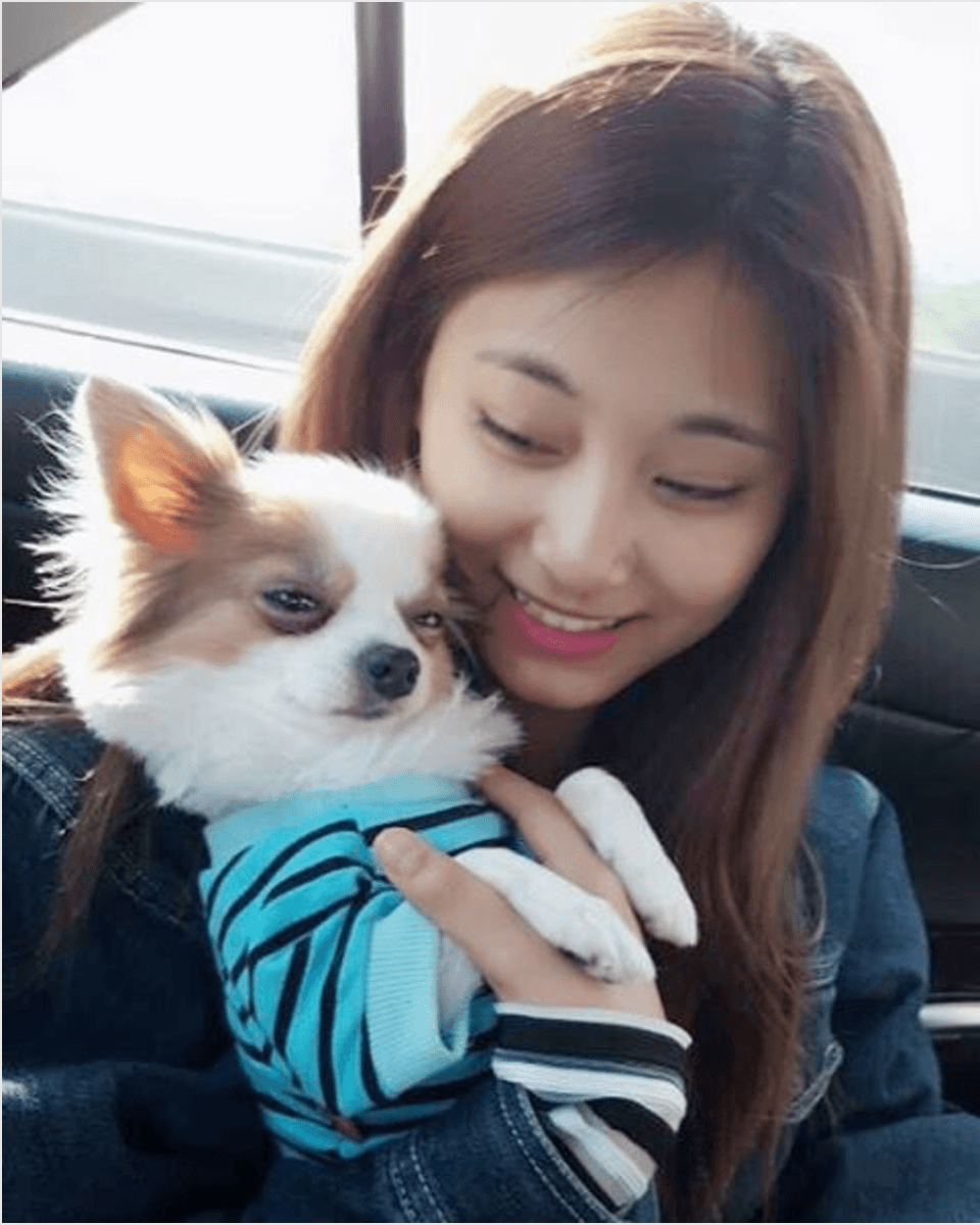 These Idols Pets Are Becoming Instagram Celebrities Koreaboo Cute Dogs Dogs Puppy Care
