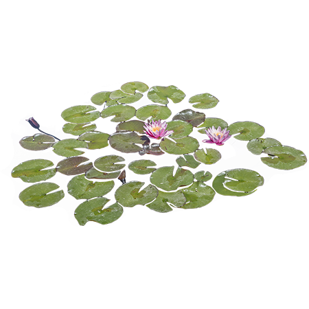 Lily Pads Floating In A Pond With Some Bright Purple Flowers Growing From Them Photoshop Landscape Flower Landscape Landscape Architecture Graphics