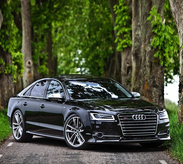 The Big Hungry Wolf In The Forest Road Car 2016 Audi S8 Plus