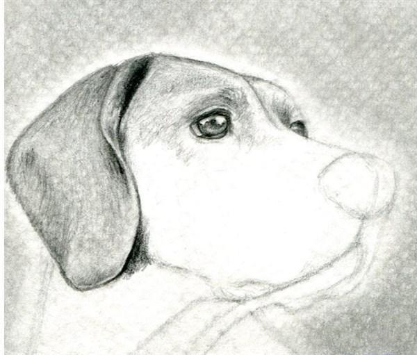 como aprender a dibujar animales domesticos a lapiz 7  anto