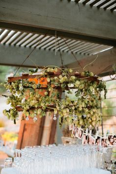 dried hops decoration - Google Search