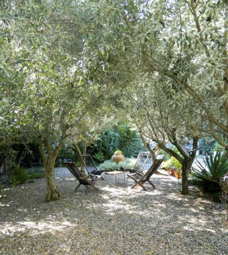 Gem tliche gesellige abende unter den olivenb umen im for Gartengestaltung olivenbaum
