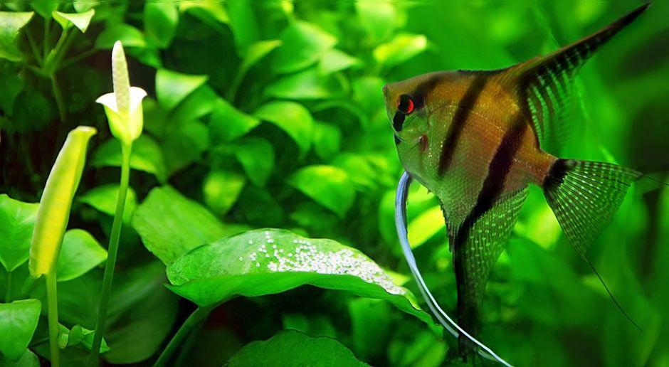 Aquarium Fishes Names And Pictures Scalar Fish Colors Fishes