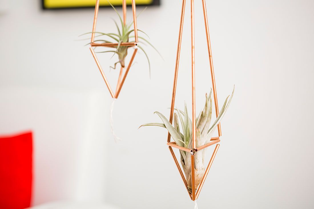 This DIY is perfect for air plants.