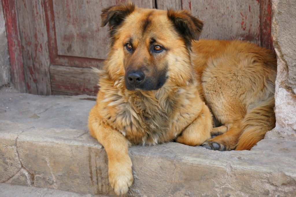 Plentz of stray dogs are walking around in Potosi and they are absolutely beautiful...travelastronaut.com