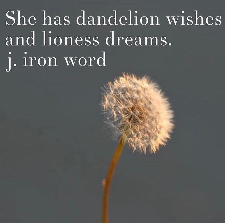 Dandelion Wishes And Lioness Dreams J Iron Word Dandelion Quotes Dandelion Wish Dandelion
