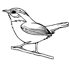 Resultado De Imagen Para Imagenes De Pajaros Para Imprimir South Carolina Art Wildflower Drawing Bird Coloring Pages