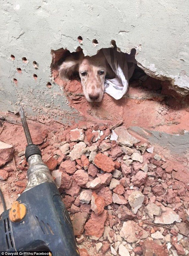 Pixie the dog rescued after being stuck between two walls