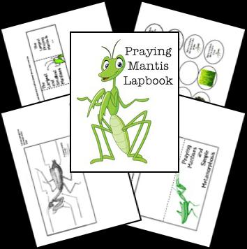 Www Homeschoolshare Com Dragonfly Php Insects Preschool Praying Mantis Animal Study