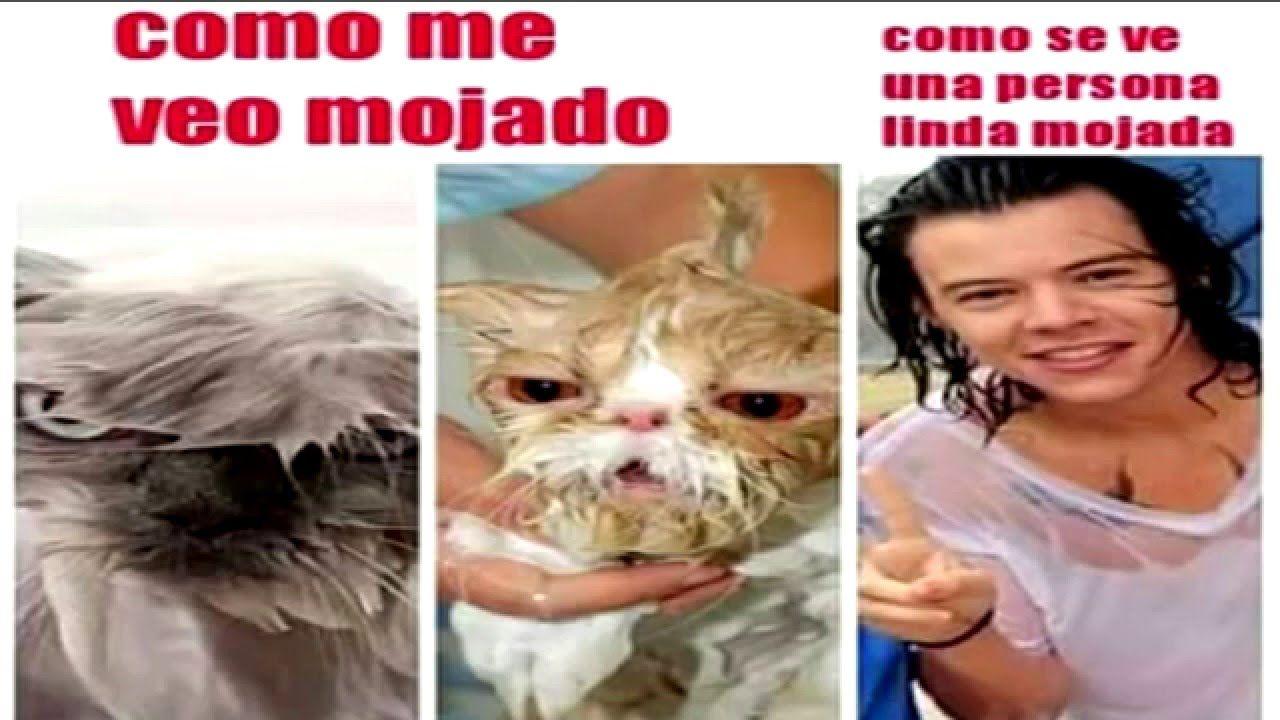 Memes 2016 En Espanol Buscar Con Google Harry Styles Memes Memes Memes En Espanol