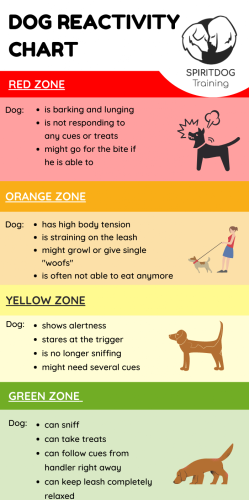 Reactive Dog Training Tips To Help Your Dog Get Better In 2021 Reactive Dog Dog Training Dog Stress