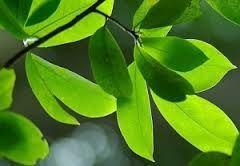 Resultado de imagen para herbs leaves