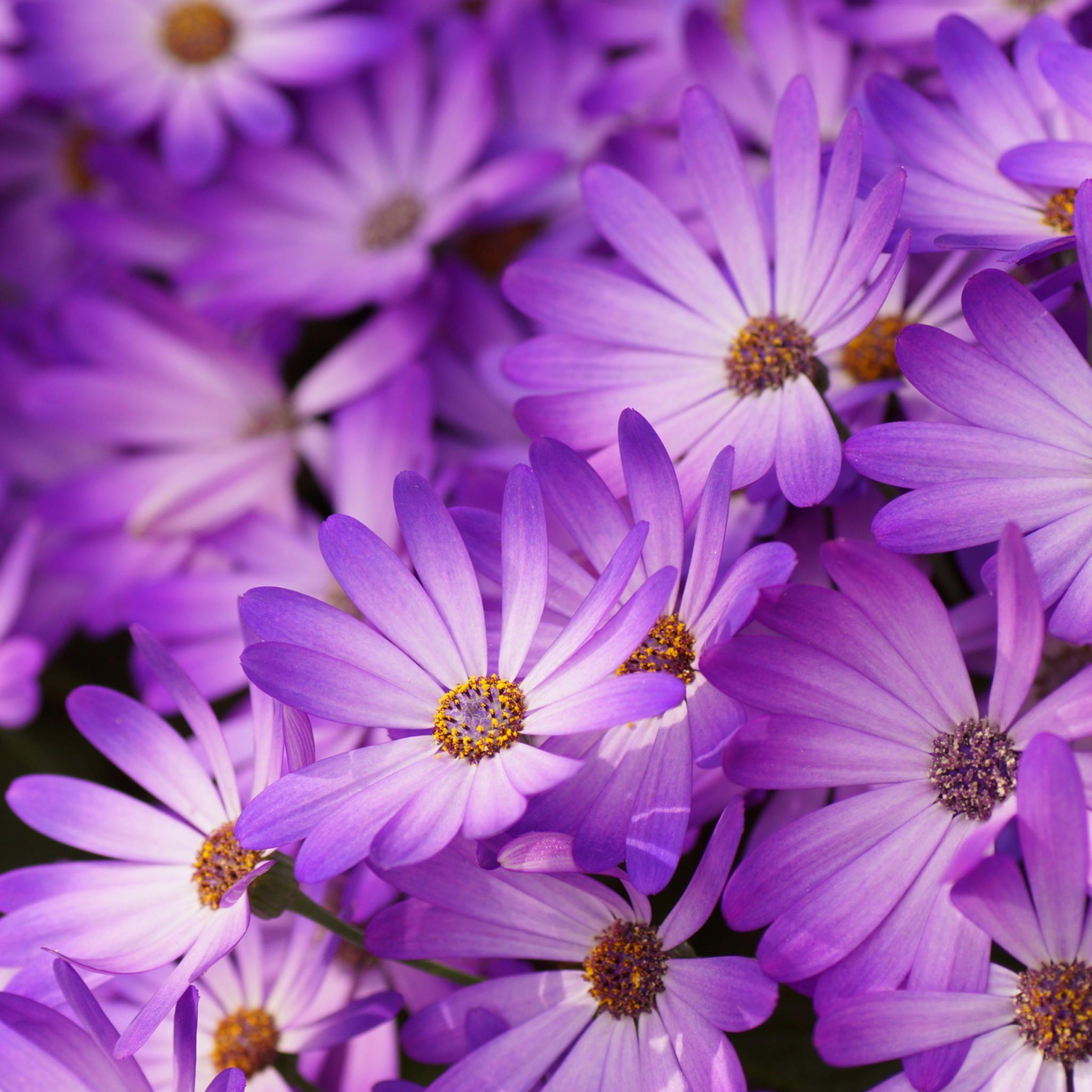 Link Flower