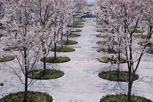 Cherry Blossom Sakura Hiroba Design By Tadao Ando Makuhari Landscape Design Commercial Landscape Design Landscape Architecture