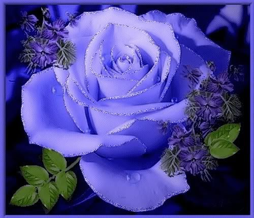 Imágenes De Rosas Para Descargar Gratis