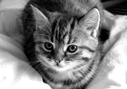 Kitten Pretty Cats Cute Cat Names Tabby Cat