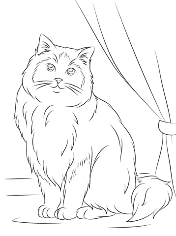 Lovely Ragdoll Cat Coloring Page From Cats Category. Select From 25105 Printable  Crafts Of Cartoons,