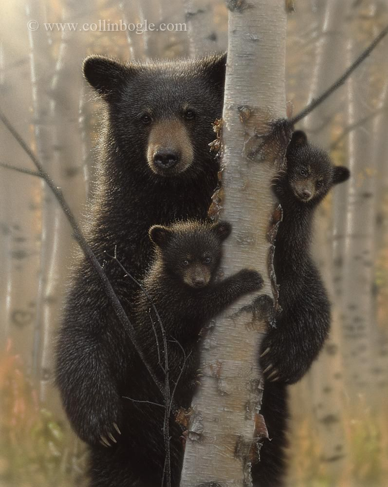 Mama Bear - Black Bear, Hand Signed Art Print by Collin Bogle – Collin Bogle Nature Art
