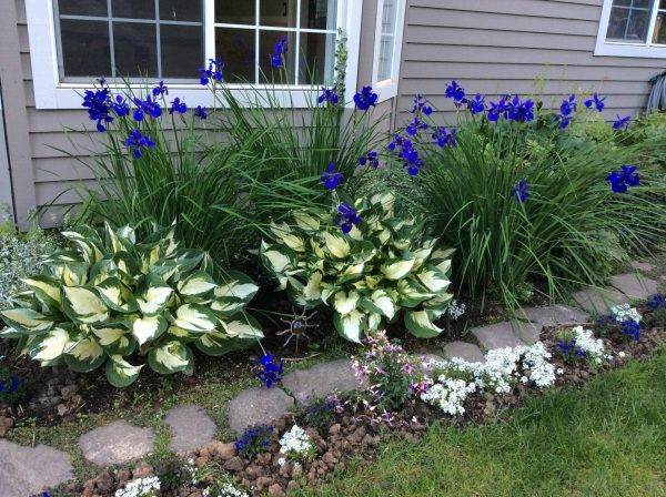 Iris Plants And Hostas Yahoo Image Search Results Front Yard Landscaping Design Cottage Garden Yard Landscaping