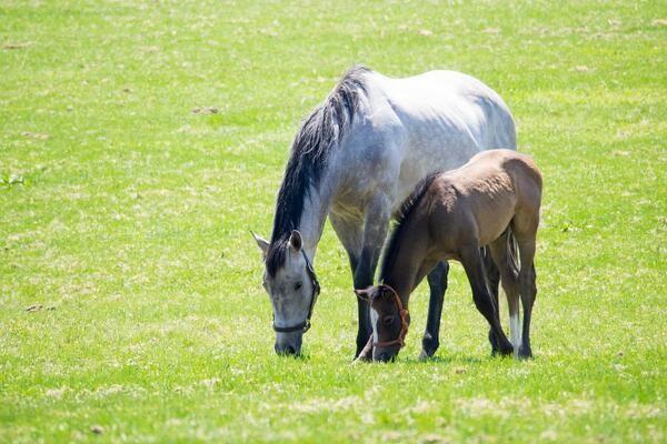Reve d'Essor (JPN) & her 2014 Harbinger (GB) colt
