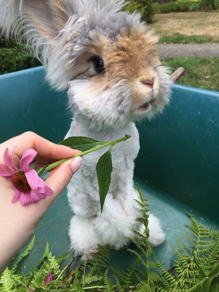Pin Von Tina Auf Hasen Hase Kaninchen
