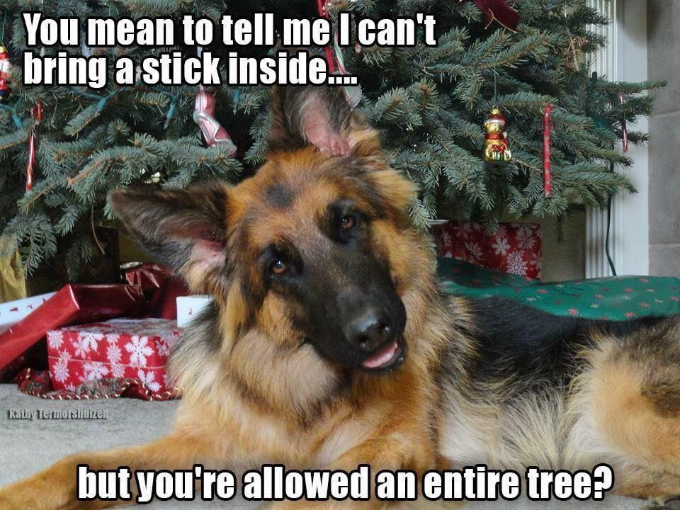 That's exactly how my dog was looking at me! Dogs, Funny