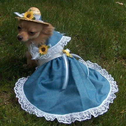 SOUTHERN BELLE Dog halloween costumes, Dog halloween