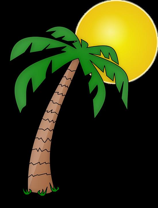 Imagen Gratis En Pixabay Isla Palmier Palmera Plantas De La Selva Palmera Dibujo Imagenes De Piratas
