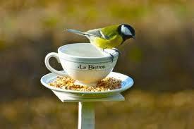"""Résultat de recherche d'images pour """"superbe abri oiseaux"""""""