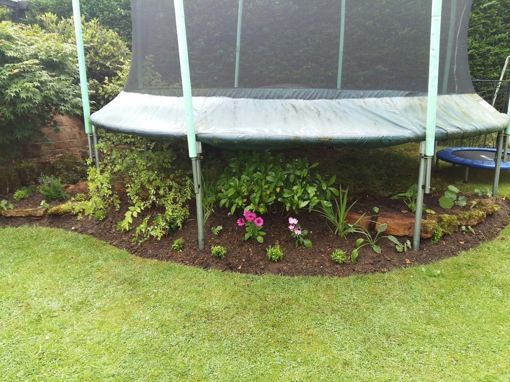 Planting Under A Trampoline Trampolinechickencoop Trampolinefort Backyard Trampoline Backyard Backyard Ideas For Small Yards