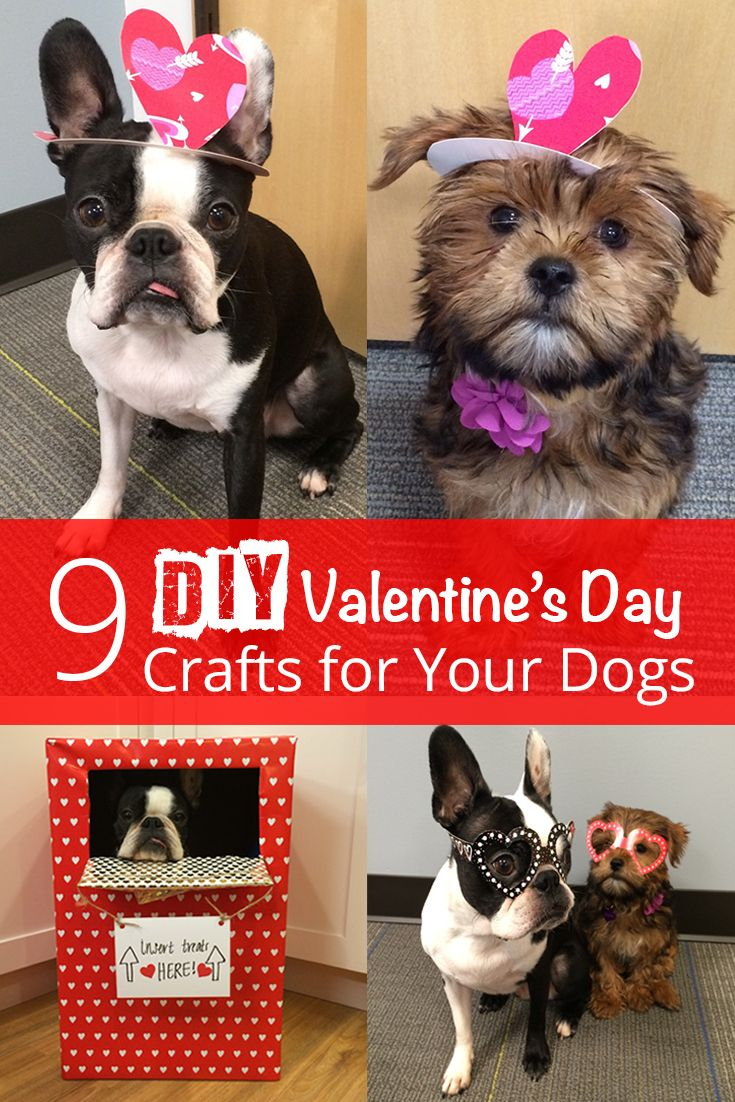 We Tried 9 Diy Valentine S Crafts With Our Dogs Here S What Happened Dog Valentines Dogs Diy Dog Stuff