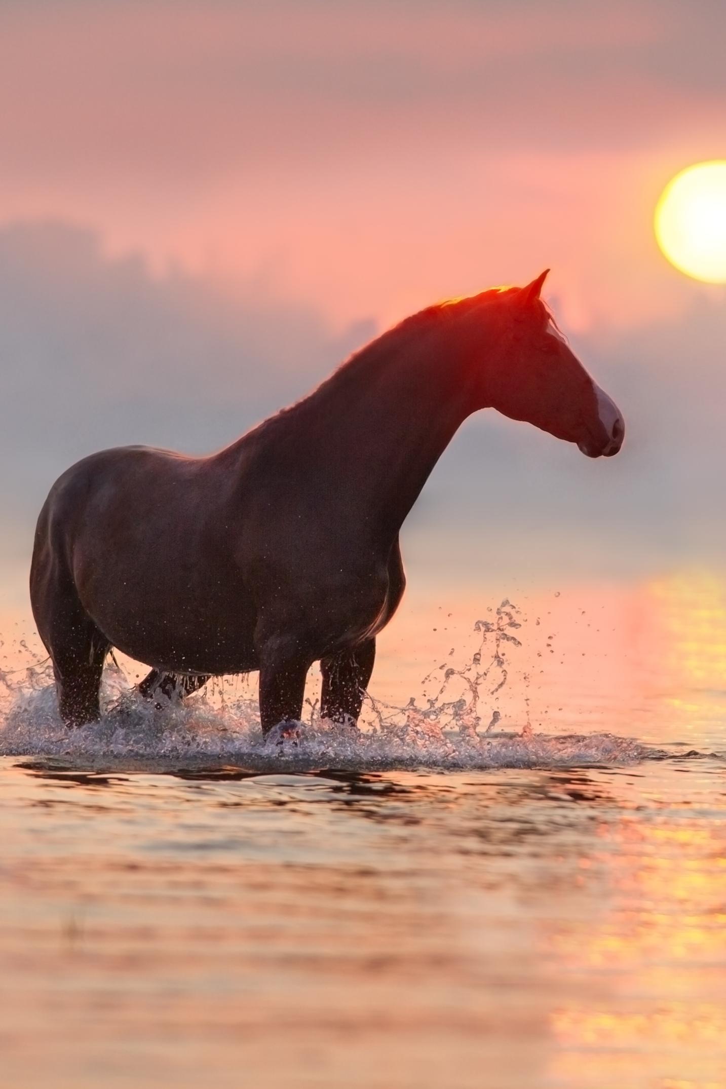 Un Couche De Soleil En Bonne Compagnie Paysage Chevaux France Horse Camargue Voyage Travel Inspiration B Fond Ecran Cheval Coucher De Soleil Cheval