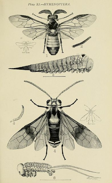 n134_w1150 | Insect art, Insects, Illustration