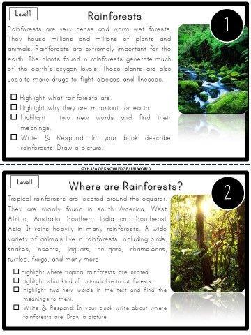 The Rainforest Reading Comprehension | World Travel